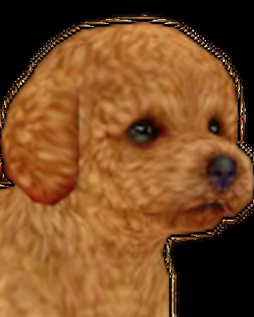 Toy Poodle Nintendogs Wiki Fandom