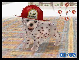 File:Dalmatian wearing fireman's hat.jpg