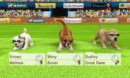 -Nintendogs Cats- 013