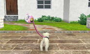 -Nintendogs Cats- Luv
