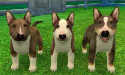 bull terrier nintendogs wiki fandom powered by wikia