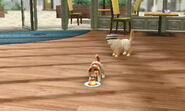 Nintendogs+Cats 028