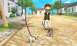 -Nintendogs Cats- Stella