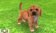 Beagle-odd3