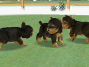 Yorkies kennel