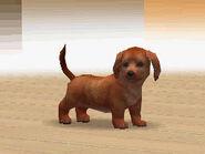 nintendogs dachshund