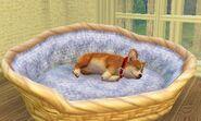 Sleeping-wickerdogbed