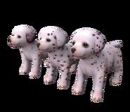 Dalmatianrippedmodel