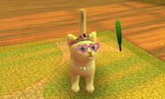 KittyDawgs 010