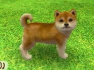 RedShiba