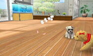 -Nintendogs Cats- Piggy Bank