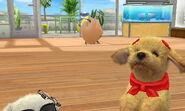 -Nintendogs Cats- Pr