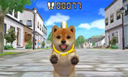 Puppy pedometer