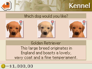 DalmFriendsGoldenRetrieverOptions
