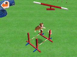Agility long hurdle