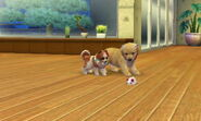 Nintendogs Cats 005