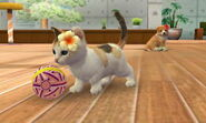 3DS pictures 176