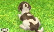 Beagle-odd5