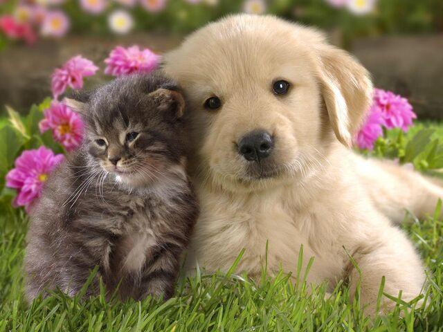 File:Puppy-and-kitten.jpg