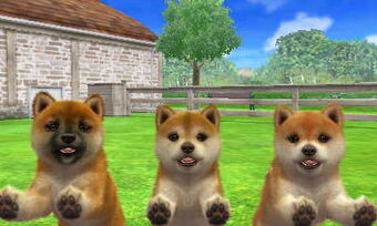 Shiba Inu | Nintendogs + Cats Club Wiki | Fandom