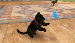 File:Kitten1.jpg