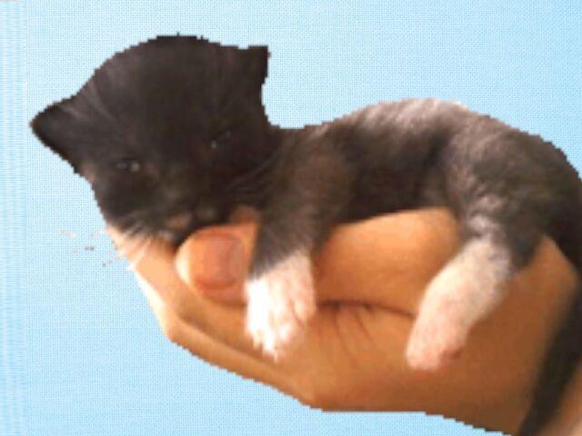 File:Newborn kitty.jPJ.jpg
