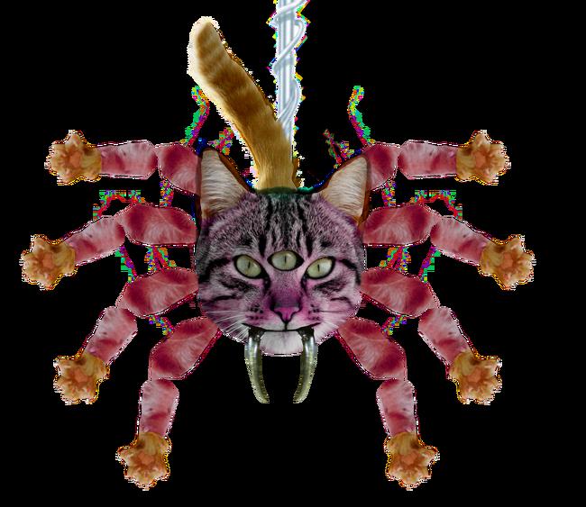 Catpider