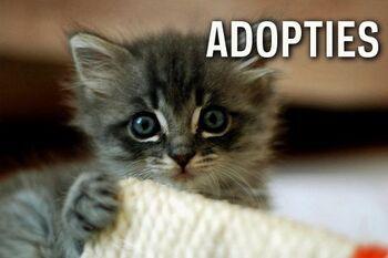 Aanvragen adopties