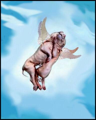 File:Pigsinspace2 large.jpg