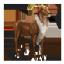Elder Kudu