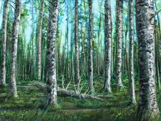 Birch Forest-Main