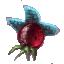 Starfire Berries