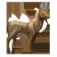 Fenelihorn