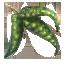 Pea Leaves