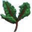 Thornfruit Leaves