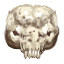Behemoth Skull