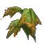 Devil's Shoe Leaves
