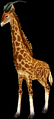 Giraffe (World of Warcraft)