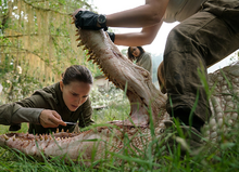 Mutant Alligator (Annihilation)