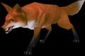 Fox (World of Warcraft)
