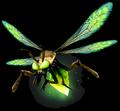 Firefly (World of Warcraft)