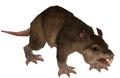Jahai Rat