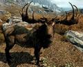 Elk (Elder Scrolls)