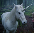 Unicorn (Once Upon a Time)
