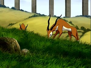 FoxAntelope