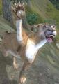 Mountain Lion (Elder Scrolls)