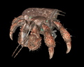 Hermit Crab (Fallout)