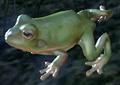 Frog (Elder Scrolls)