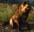 Warg (The Witcher)