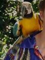 Zombie Macaw